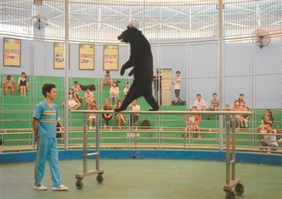 广州动物园宣布终止马戏 马戏团:将继续演