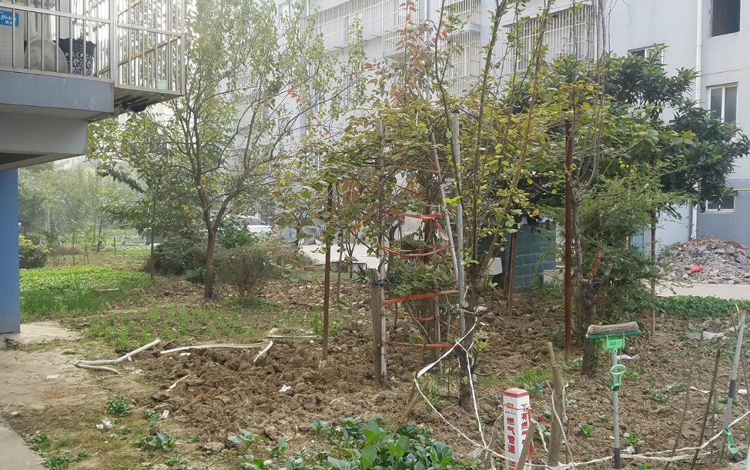 安置小区内划绿化种菜 粪臭连连